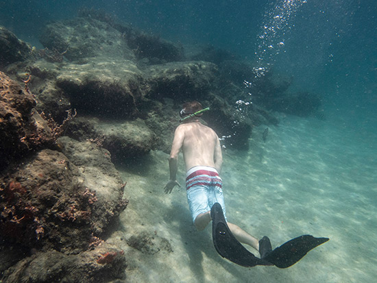 Guy snorkeling in palm beach